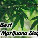 30+ Best Anti Marijuana Slogans