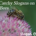 30 + Catchy Slogans on Save Bees